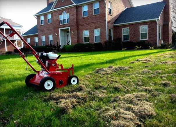 Как посадить газон своими руками 3
