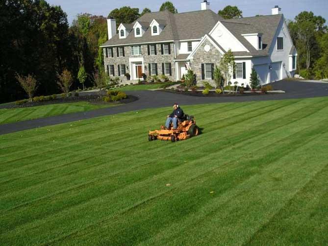 Как посадить газон своими руками 9