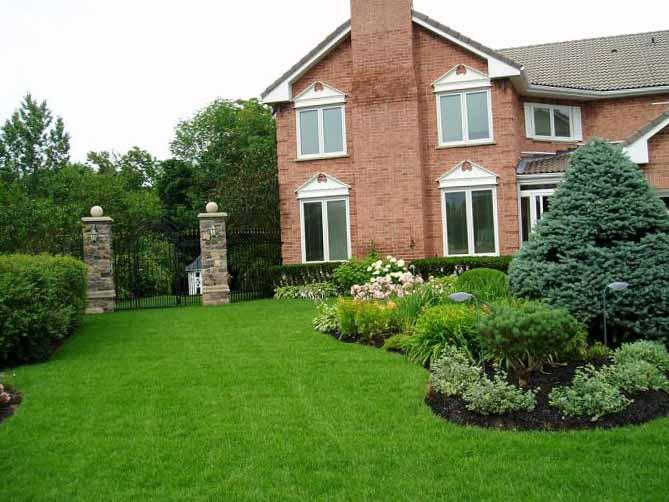 Как посадить газон своими руками 10