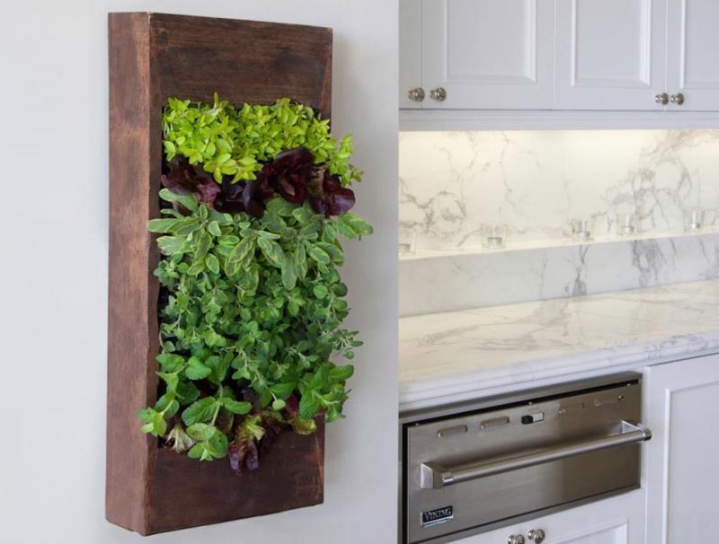Вертикальный огород на кухне 2