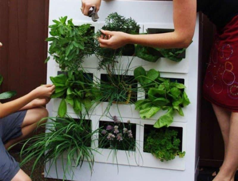 Вертикальный огород на кухне 3