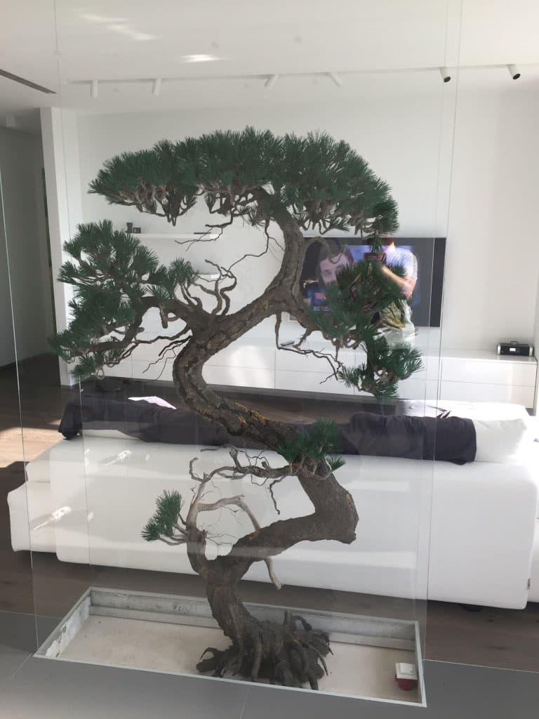 Бонсай в интерьере гостиной