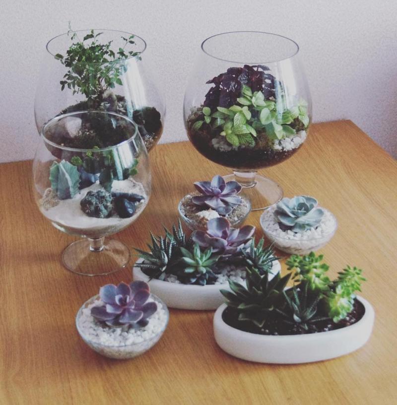 Флорариум в интерьер гостиной