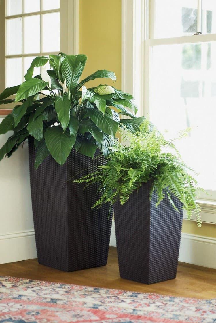 Комнатные растения в интерьер гостиной