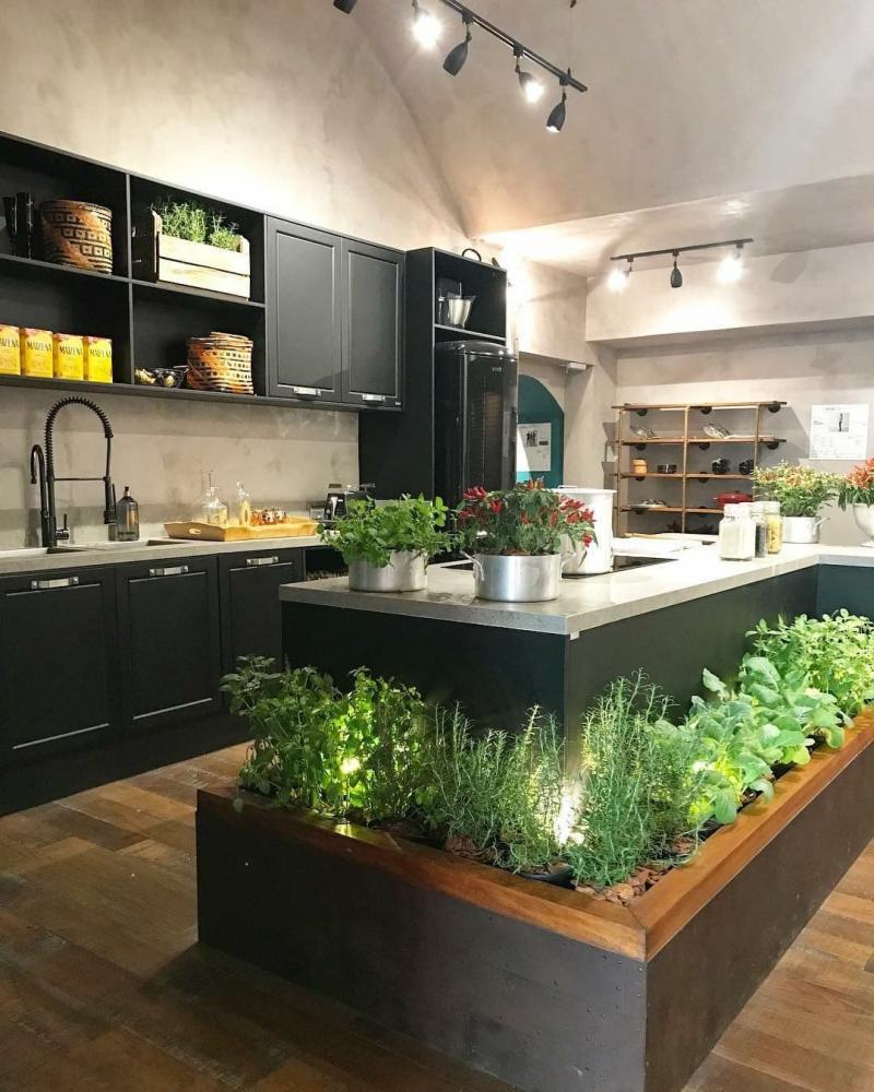Растения в интерьере кухни 2019 1