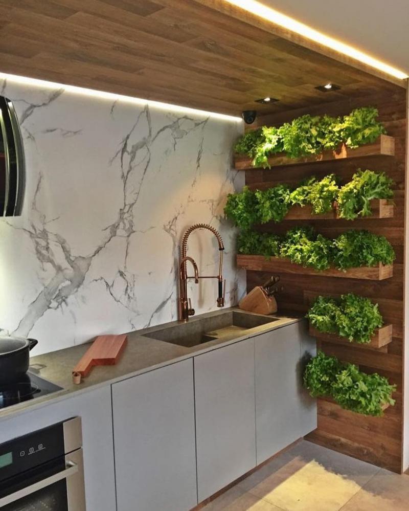 Растения в интерьере кухни 2019 2